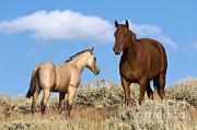 John Shaw - Horses