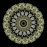 Adaptation Prints - Kaleidoscope Ernst Haeckl Sea Life Series Print by Amy Cicconi