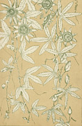 Wild Flowers Drawings - Leaves from Nature by English School