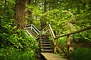 Wooden Stairs Photo Prints - Path in temperate rainforest Print by Elena Elisseeva