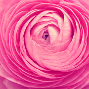 Pink Floral Art Photos - Pink by Kristin Kreet