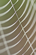 Close Focus Nature Scene Prints - Spider web with dew drops  Print by Jim Corwin