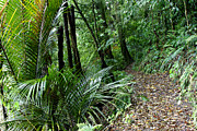 Wilderness Art - Tropical forest by Les Cunliffe