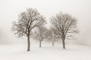 Bare Trees Posters - Winter trees in fog Poster by Elena Elisseeva