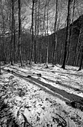 B W Photos - Wintertime by George Atsametakis