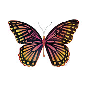 Orange And Black Butterfly Posters - 70 Sunrise Mime Butterfly Poster by Amy Kirkpatrick