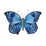 Watercolor. Butterfly Paintings - 75 Capanea Butterfly by Amy Kirkpatrick
