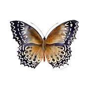 Watercolor. Butterfly Paintings - 77 Cethosia Butterfly by Amy Kirkpatrick
