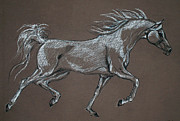 Horse Drawing Art - Arabian Horse  by Angel  Tarantella