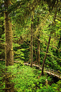 Walkway Prints - Path in temperate rainforest Print by Elena Elisseeva