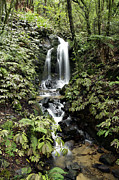 Rainforest Framed Prints - Waterfall Framed Print by Les Cunliffe