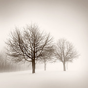 Copy Space Photos - Winter trees in fog by Elena Elisseeva