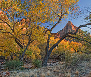 Golden October Posters - Zion National Park Poster by Utah Images