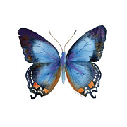 Watercolor. Butterfly Paintings - 80 Imperial Blue Butterfly by Amy Kirkpatrick