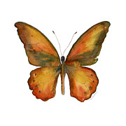 Orange And Brown Wings Metal Prints - 85 Lydius Butterfly Metal Print by Amy Kirkpatrick