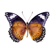 Watercolor. Butterfly Paintings - 87 Cethosia Cyane Butterfly by Amy Kirkpatrick