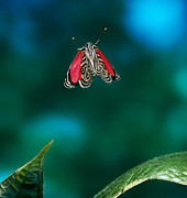 89 Butterfly In Flight Print by Stephen Dalton