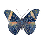 89 Red Cracker Butterfly Print by Amy Kirkpatrick
