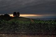 Pinot Noir Photos - 9-3-13 Sunrise in the Dundee Hills 2 by CJ Lesieutre