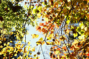 Autumn Foliage Photos - Autumn  by Les Cunliffe