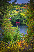 River Cabin Framed Prints - Fall forest and lake Framed Print by Elena Elisseeva