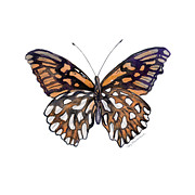 Mexican Painting Originals - #9 Mexican Silver Spot Butterfly by Amy Kirkpatrick