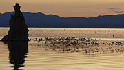 Flocks Of Birds Prints - Mono Lake California Print by Jason O Watson