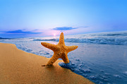 Seashore Art - Starfish by Michal Bednarek