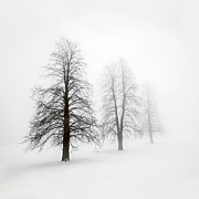Snowy Trees Posters - Winter trees in fog Poster by Elena Elisseeva