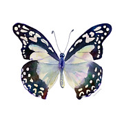 Watercolor. Butterfly Paintings - 90 Angola White Lady Butterfly by Amy Kirkpatrick