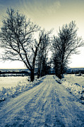 Winter Landscape. Snow Prints - Landscape - photography Print by Lyubomir Kanelov