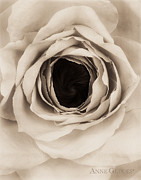 White Floral Prints - Untitled Print by Anne Geddes