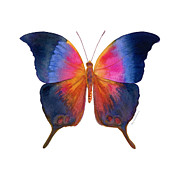 Watercolor. Butterfly Paintings - 96 Brushfoot Butterfly by Amy Kirkpatrick