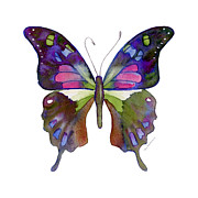 Watercolor. Butterfly Paintings - 98 Graphium Weiskei Butterfly by Amy Kirkpatrick