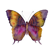 Watercolor. Butterfly Paintings - 99 Marcella Daggerwing Butterfly by Amy Kirkpatrick