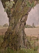 Alan Webb - A 350 year old oak tree...