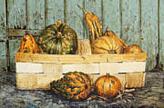 David Lyons - A basket of Gourds