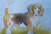 Madeline  Lovallo - A Beagle