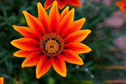 Flower Design Photos - A Beautiful Beginning by Syed Aqueel