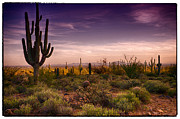 Southwest Landscape Metal Prints - A Beautiful Desert Evening  Metal Print by Saija  Lehtonen