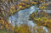 A River In Autumn Posters - A Bend in the River Poster by Loree Johnson