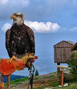 TONY GRIDER - A Bird in Hand