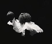 A Black And White Wonder Print by  Joe Bledsoe