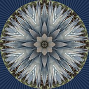 Kaleidoscope Originals - A Blue Agave by Trina Stephenson