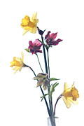 Over-exposed Metal Prints - A bouquet for you Metal Print by Constance Fein Harding