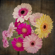 Textured Floral Prints - A bouquet of Gerbera Daisies Print by Ivy Ho