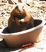 DiDi Higginbotham - A Bowl Of Groundhog And...