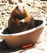 DiDi Higginbotham - A Bowl Of Groundhog And...
