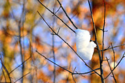 Frost Photo Originals - A branch with snow by Tommy Hammarsten