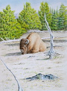 Park Scene Paintings - A Buffalo Sits in Yellowstone by Michele Myers